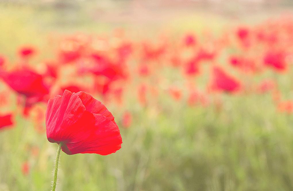 Mayo, mes de las flores en Córdoba