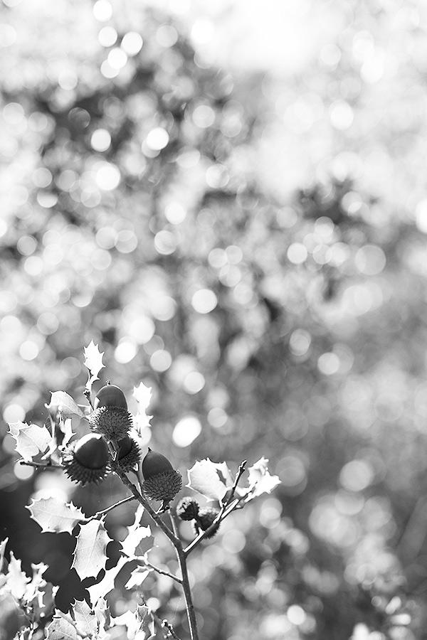 luz fotografia